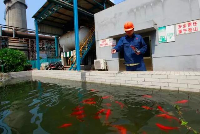 """江苏永钢集团废水重复利用零排放获评为""""绿色工厂"""""""
