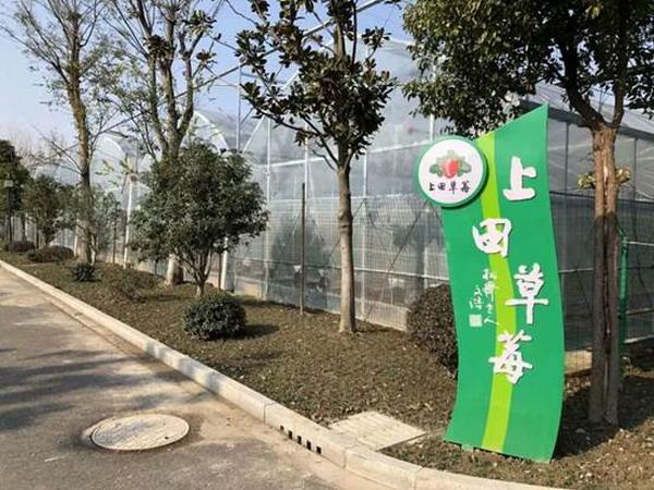 现代设施农业上田草莓园用上了先进的反渗透净水设备
